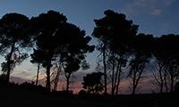 Le sirene del bosco e Movimenti di massa